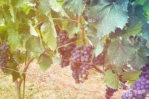 avventura-uva