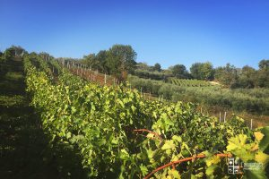 avventura-vitigno