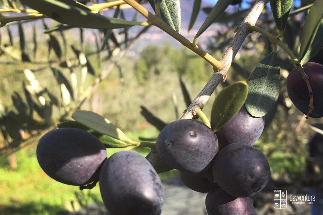 avventura-olive