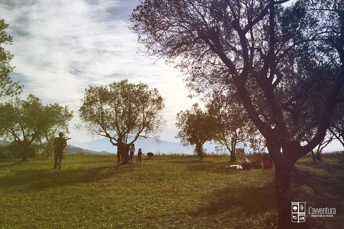 avventura-raccolta-olive