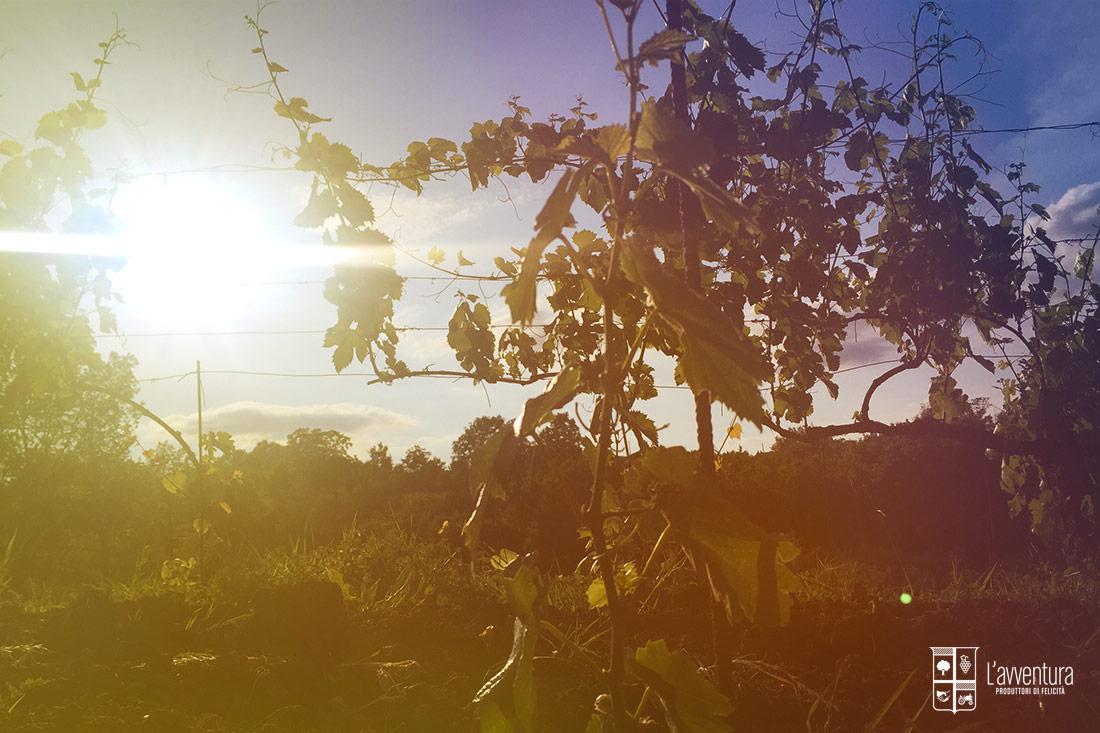 avventura-vigneto-tramonto